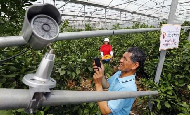 한국의 발달된 정보통신기술(ICT)로 온실 관리를 손쉽게 할 수 있는 '스마트팜'이 전국으로 확대될 전망이다(왼쪽 사진). 농장주는 언제 어디서든 스마트폰으로 전달된 온실 내부 모습, 온실의 온습도 및 공기 상태 등 농사 정보(오른쪽 사진)를 확인할 수 있고, 온풍기와 펌프 등에 작동 명령을 내릴 수 있다. - 원대연 동아일보 기자 yeon72@donga.com 제공